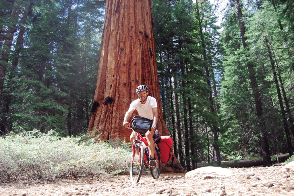 Sequoiab