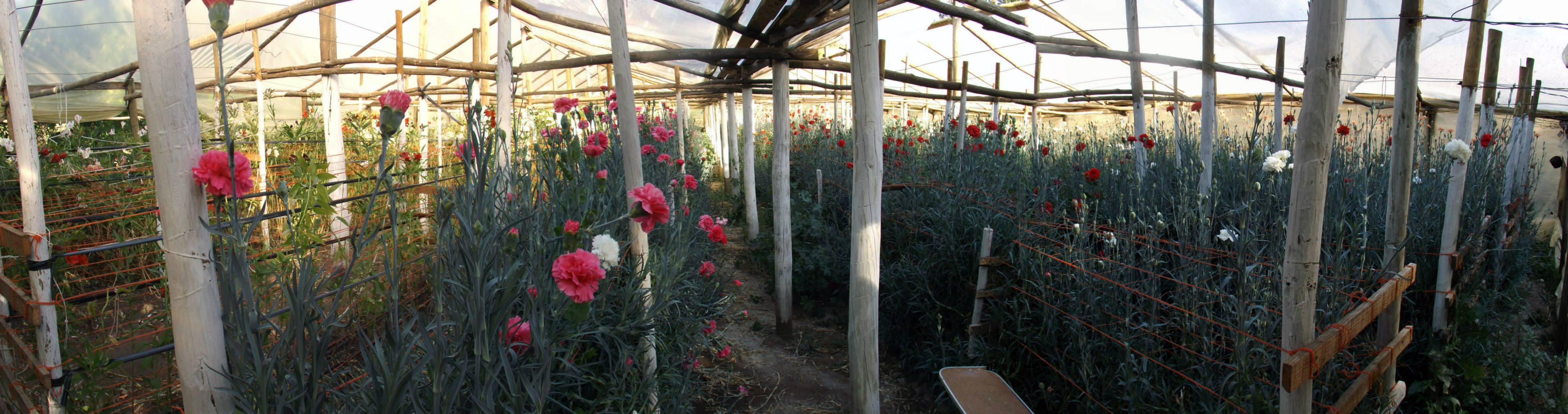 invernadero-flores